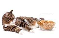 Grijze kat en droog voedsel royalty-vrije stock fotografie