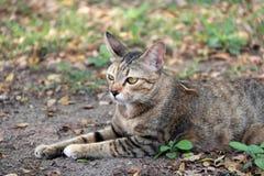 Gestreepte kat in de tuin de kat is een klein geacclimatiseerd vleesetend zoogdier met zacht bont royalty-vrije stock afbeelding