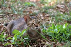 Gestreepte kat in de tuin de kat is een klein geacclimatiseerd vleesetend zoogdier met zacht bont stock foto's