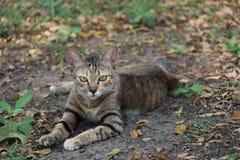 Gestreepte kat in de tuin de kat is een klein geacclimatiseerd vleesetend zoogdier met zacht bont stock foto