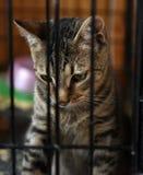 Gestreepte kat in een kooi Royalty-vrije Stock Fotografie