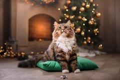 Gestreepte kat en gelukkige kat Kerstmisseizoen 2017, nieuw jaar Stock Afbeelding