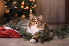 Gestreepte kat en gelukkige kat Kerstmisseizoen 2017, nieuw jaar Royalty-vrije Stock Foto's
