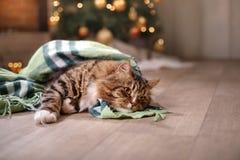 Gestreepte kat en gelukkige kat Kerstmisseizoen 2017, nieuw jaar Stock Foto
