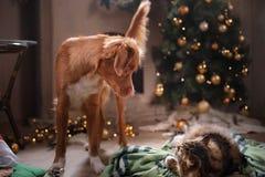 Gestreepte kat en gelukkige kat Kerstmisseizoen 2017, nieuw jaar Stock Afbeeldingen