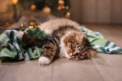 Gestreepte kat en gelukkige kat Kerstmisseizoen 2017, nieuw jaar Royalty-vrije Stock Fotografie