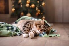Gestreepte kat en gelukkige kat Kerstmisseizoen 2017, nieuw jaar Stock Foto's