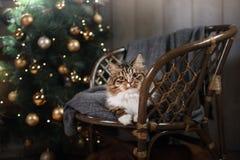 Gestreepte kat en gelukkige kat Kerstmisseizoen 2017, nieuw jaar Royalty-vrije Stock Afbeelding