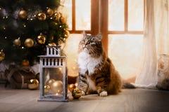 Gestreepte kat en gelukkige kat Kerstmisseizoen 2017, nieuw jaar Royalty-vrije Stock Foto