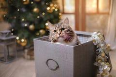 Gestreepte kat en gelukkige kat Kerstmisseizoen 2017, nieuw jaar Royalty-vrije Stock Afbeeldingen