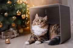 Gestreepte kat en gelukkige kat Kerstmisseizoen 2017, nieuw jaar Stock Fotografie