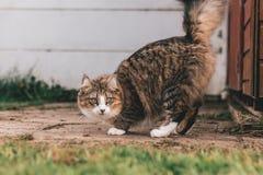 Gestreepte kat en witte kat die buitenkant dichtbij het gras kijken stock afbeelding