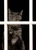 Gestreepte kat Longing stock afbeelding