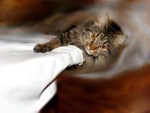 Gestreepte kat luie kat Royalty-vrije Stock Fotografie