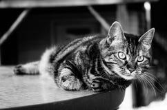 Gestreepte kat op een Lijst Stock Foto