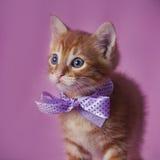 Gestreepte kat rood katje Stock Afbeeldingen