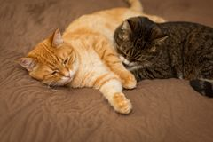 Gestreepte kat twee op het bed Stock Afbeeldingen