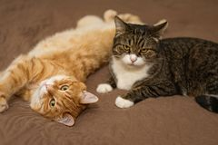 Gestreepte kat twee op het bed Stock Foto