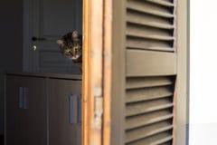 Gestreepte katcontrole van het venster Royalty-vrije Stock Foto's