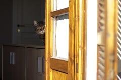Gestreepte katcontrole van het venster Royalty-vrije Stock Fotografie