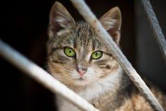Gestreepte katkat Stock Afbeelding