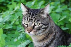 Gestreepte katkat in de tuin Royalty-vrije Stock Fotografie