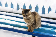 Gestreepte katkat in de winter stock foto