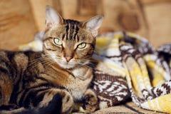 Gestreepte katkat die op een bank thuis liggen stock afbeelding