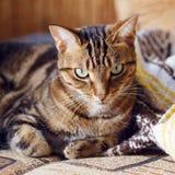 Gestreepte katkat die op een bank thuis liggen stock foto