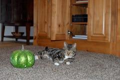 Gestreepte gestreepte katkat die zwarte en oranje heksenhoed met zijn favoriete groene pompoen dragen stock foto