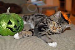Gestreepte gestreepte katkat die zwarte en oranje heksenhoed met zijn favoriete groene pompoen dragen royalty-vrije stock foto