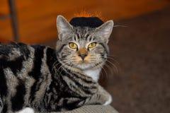 Gestreepte gestreepte katkat die zwarte en oranje heksenhoed met zijn favoriete groene pompoen dragen stock foto's