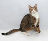 Gestreepte katkat met gele ogen die stil liggen Stock Afbeeldingen