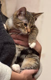 Gestreepte katkatje stock afbeelding