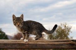 Gestreepte katkatje! Stock Foto