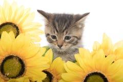 Gestreepte katkatje en zonnebloemen Stock Foto