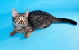 Gestreepte katkatje met gele ogen die op blauw liggen Stock Afbeeldingen