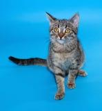Gestreepte katkatje met gele ogen die op blauw zitten Royalty-vrije Stock Afbeeldingen