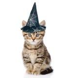 Gestreepte katkatje met hoed voor Halloween Op witte achtergrond royalty-vrije stock foto's