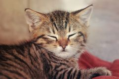 Gestreepte katkatje slaperig felling stock foto