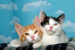 Gestreepte katkatjes klaar voor een dutje Royalty-vrije Stock Fotografie