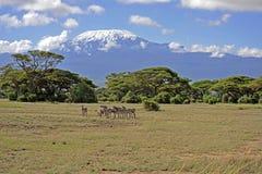 Kilimanjaro Royalty-vrije Stock Foto
