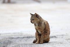 Gestreepte oranje kattenzitting op de concrete grond een klein geacclimatiseerd vleesetend zoogdier met zacht bont royalty-vrije stock afbeeldingen