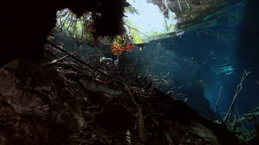 Gestreepte vissen in struikmeer Yucatan Mexico cenote stock video