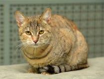 Gestreift mit brauner Katze stockfotos