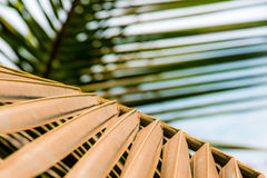 Gestreift vom Palmblatt lizenzfreies stockfoto