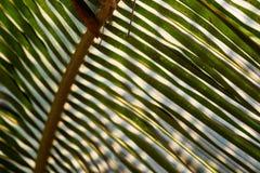 Gestreift vom Palmblatt stockbild