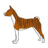Gestreifte basenji Hundestellung Stockbild