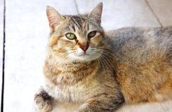 Gestreifte beschmutzte Katze schaut auf dem Boden stockfoto
