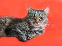 Gestreifte flaumige Katze mit den grünen Augen, die auf Rot liegen Stockbilder